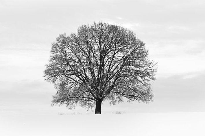 CLASSIC TREE STATEMENT WALL WALLPAPER MURAL